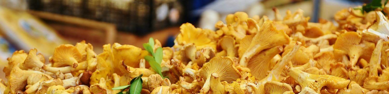 compagnie du champignon sylvestre, chanterelle des bois