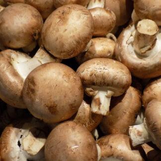 champignon de paris