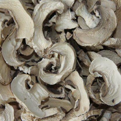 champignon de paris séché